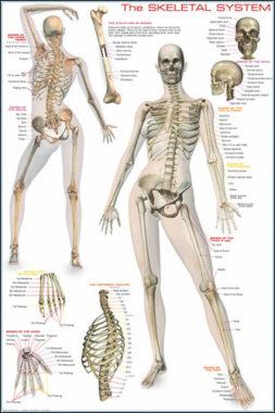 Contoh-Tulang-Keras