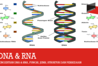 Pengertian DNA & RNA