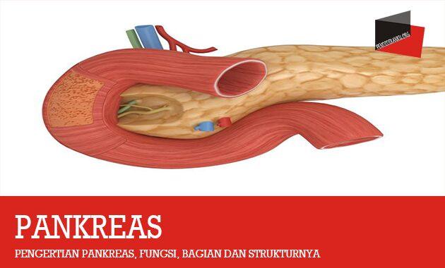 Pengertian Pankreas