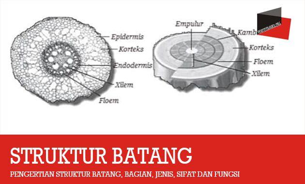 Pengertian Struktur Batang