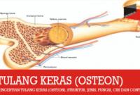Pengertian Tulang Keras