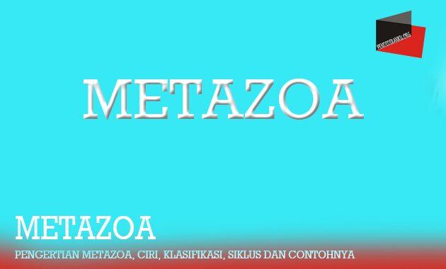 Pengertian Metazoa