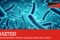pengertian-bakteri