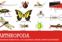 pengertian-arthropoda