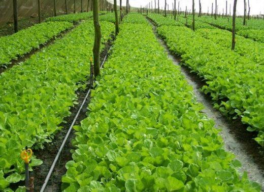 Fungsi-Manajemen-Agribisnis