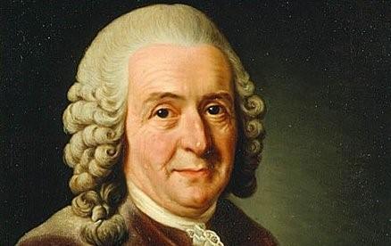 Carolus-Linnaeus-Bapak-Klasifikasi