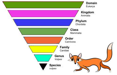 Tingkatan taksonomi